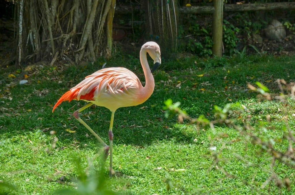 Le parc National de Guadeloupe